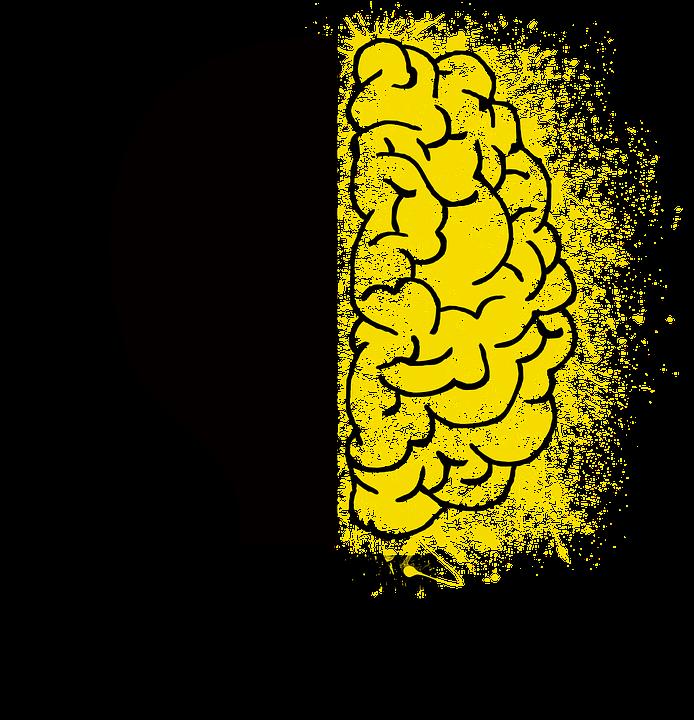 brain-2062053_960_720